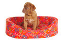 Puppy Sitting in its Cot Stock Images