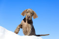 Puppy in snow against sky Royalty Free Stock Images