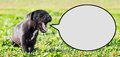 Puppy with speech bubble Royalty Free Stock Photo