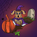 Puppy takes a pumpkin from the grave