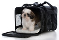 puppy in travel carrier Royalty Free Stock Photo
