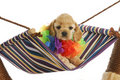 Puppy vacation Royalty Free Stock Photography