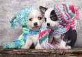 Puppy wearing a knit ha hat Stock Images