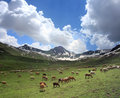 Purbinar valley pakistan s wild life national park and trek to dudipat lake the trek provides lush green eye soothing views and Royalty Free Stock Photos