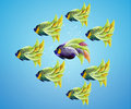 Purble angelfish between group of green angelfish Royalty Free Stock Photo