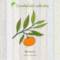 Pure essential oil collection, mandarine. Wooden texture background