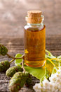 Pure essential oil herbal in glass bottle on woden desk with ginkgo leaf and alder cones Stock Photography
