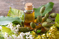Pure essential oil herbal in glass bottle on woden desk with ginkgo leaf and alder cones Royalty Free Stock Image