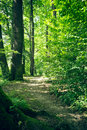 Pure nature a forest trail in the summer with sunshine Stock Images