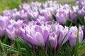 Pure purple Royalty Free Stock Photo