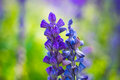Pure purple flower in garden background Royalty Free Stock Photo