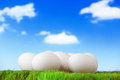 Pure white eggs on green grass with sky Royalty Free Stock Images