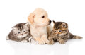 Purebred puppy dog and two british kittens lying in front isolalated isolated on white Stock Photos
