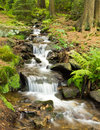 Purling brook in the forrest bavaria Stock Images