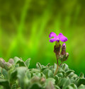 Purple bloom closeup macro detail of one flower in bed garden Stock Image