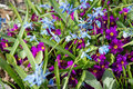 Purple and blue flowers flowerbed with Royalty Free Stock Photo