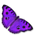 Purple butterfly flying isolated on white background Stock Images