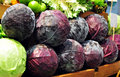 Purple Cabbage Stock Image
