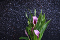 Purple calla lilies Royalty Free Stock Photo