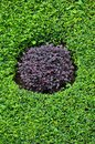 Purple Circle formed by Purple and Green Bushes Royalty Free Stock Photos