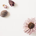 Purple color dry flower on white background