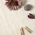 Purple color dry flower and wooden clip on beige fabric background