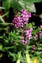 Purple colors of forget me not flower with Indoor garden