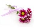 Purple Dahlia flowers Royalty Free Stock Photo