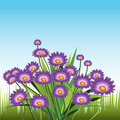 Purple Daisies Stock Photos