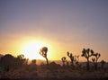 Purple Desert Sunset