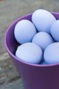 Purple eggs in bowl Royalty Free Stock Image
