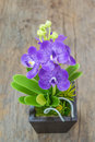 Purple  fake  orchid  on wood background Royalty Free Stock Photo