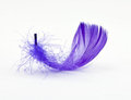 Purple Feather 1 Royalty Free Stock Photo