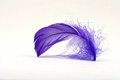 Purple Feather 2 Royalty Free Stock Photo