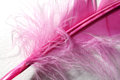 Purple feather detail Royalty Free Stock Photography