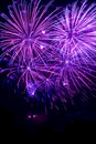 Purple fireworks Stock Image
