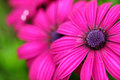 Purple flower close up Royalty Free Stock Photo