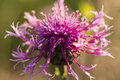Purple flower covered with dew droplets Royalty Free Stock Photo
