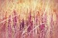 Purple flower flowering beautiful wild in meadow in grass Stock Photos