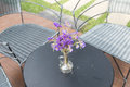 purple flower in glass vase, wicker chair on patio Royalty Free Stock Photo