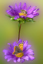 Purple flower with insects butterfly and bee Royalty Free Stock Photos