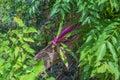 Purple flower on the tree