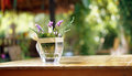 Purple flower in vase on wood table copy space blur nature backg Royalty Free Stock Photo