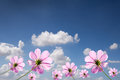 Purple flowers against with blue sky Royalty Free Stock Image