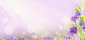 Purple flowers on blured background with bokeh banner for website Stock Photography