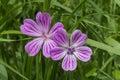 Purple flowers on the grass