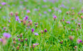 Purple flowers meadow Royalty Free Stock Photo