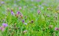 Purple Flowers Meadow
