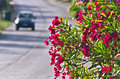 Purple flowers on morning sun by a coastal road in Sithonia Royalty Free Stock Photo