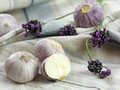 Purple Garlic Royalty Free Stock Photos